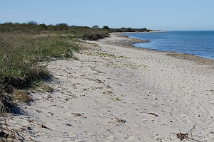 Habitat C. maritima on sea shore of Hiddensee